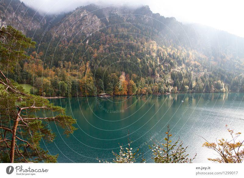 Nature Vacation & Travel Landscape Calm Forest Mountain Autumn Lake Tourism Weather Illuminate Fog Idyll Trip Climate Joie de vivre (Vitality)