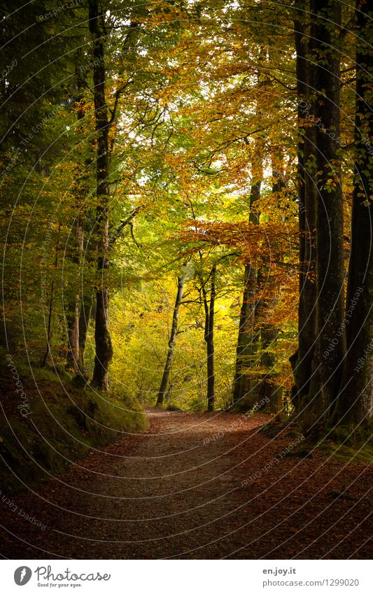 Nature Vacation & Travel Old Relaxation Landscape Loneliness Leaf Calm Dark Forest Yellow Sadness Autumn Lanes & trails Dream Gold