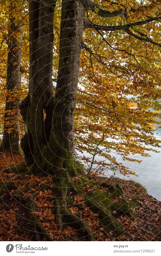 Nature Plant Tree Leaf Forest Environment Yellow Life Sadness Autumn Orange Growth Gold Climate Transience Hope