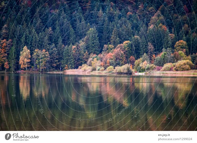 parted Vacation & Travel Trip Nature Landscape Sunlight Autumn Automn wood Coniferous forest Mixed forest Forest Lakeside Contentment Romance Calm Sadness