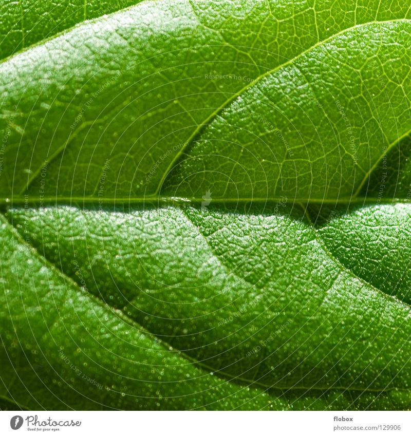 Nature Green Plant Summer Leaf Spring Environment Fresh Energy industry Growth Vegetable Beautiful weather Botany Ecological Organic produce Vessel