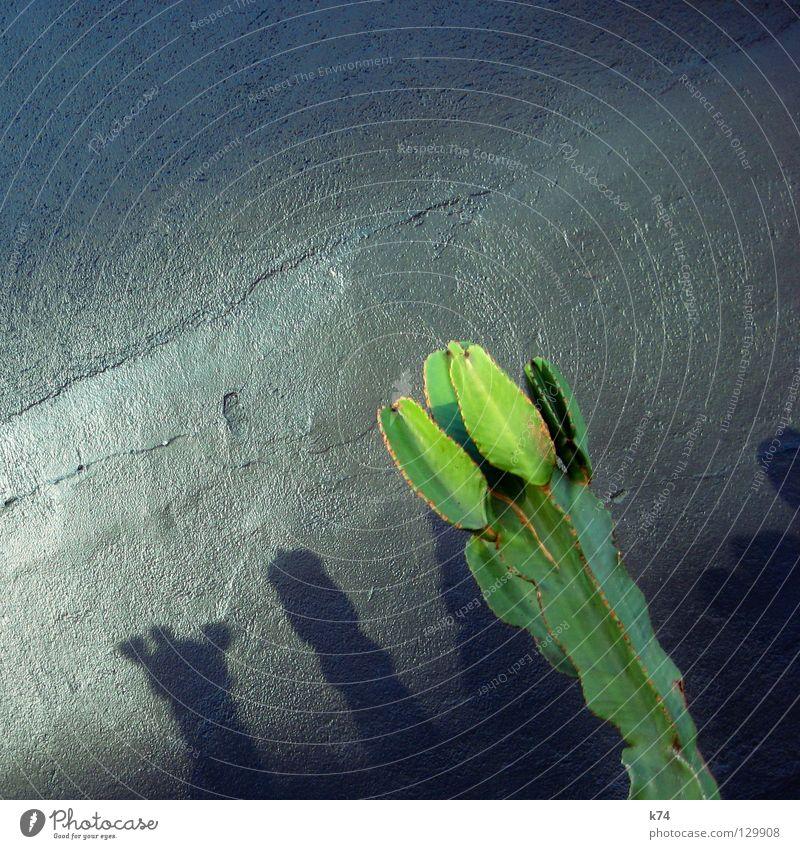 Green Plant Wall (building) Gray Glittering Desert Silver Plaster Mexico Cactus Deception Succulent plants