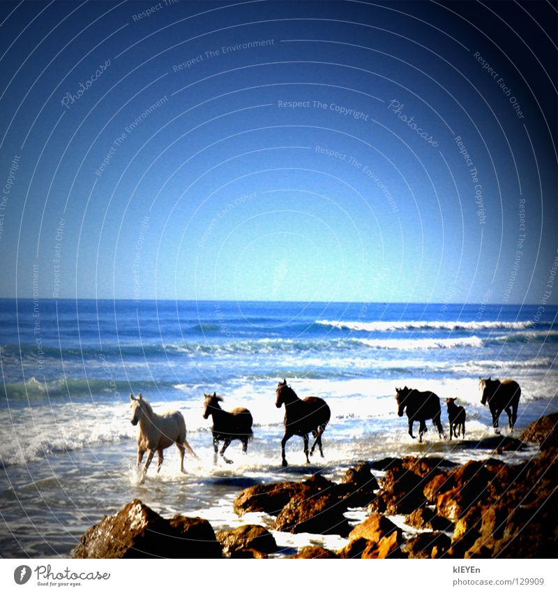 Sky Sun Ocean Summer Joy Beach Vacation & Travel Freedom Stone Waves Horse Mammal White crest Gorgeous Foal