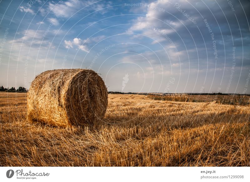 stubble field Healthy Eating Allergy Economy Agriculture Forestry Health care Nature Landscape Sky Clouds Horizon Sunlight Summer Autumn Beautiful weather Field
