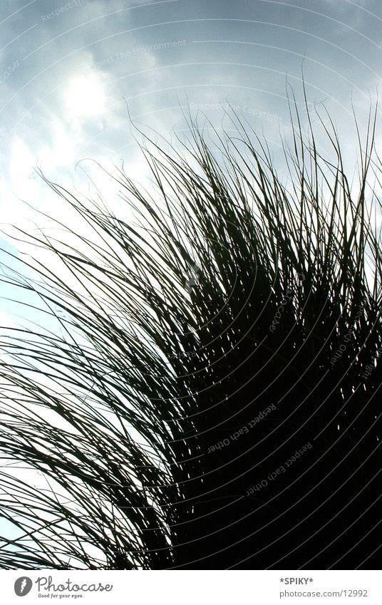 blades of grass Grass Green Nature