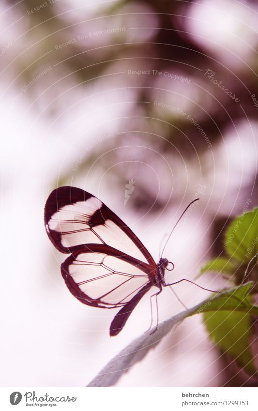 Nature Plant Beautiful Summer Leaf Animal Spring Meadow Small Garden Exceptional Flying Legs Brown Pink Park