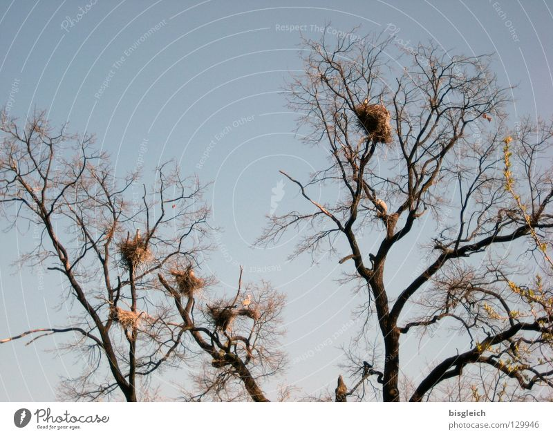 Sky Tree Calm Animal Bird Group of animals Branch Twig Nest Heron Grey heron