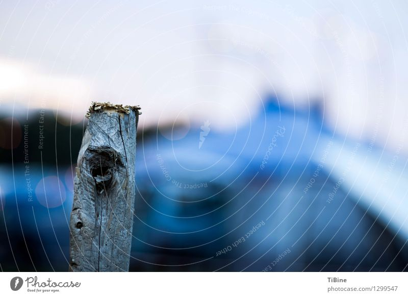 Eyes(gaze) Wood Blue Colour Pole Dusk Colour photo Exterior shot Deserted Copy Space right Evening Twilight Low-key Blur Shallow depth of field