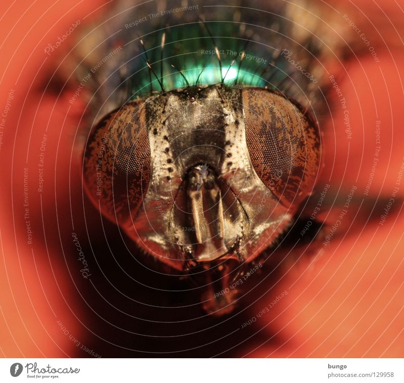 Animal Eyes Fly Insect Near Under Watchfulness Intuition Compound eye Mandible