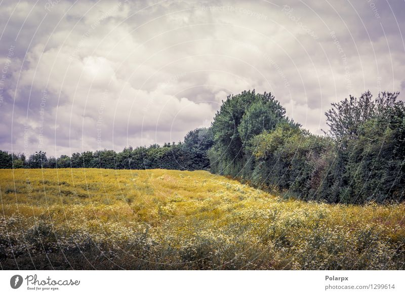 Cloudy weather over a field Beautiful Summer Sun Environment Nature Landscape Plant Sky Clouds Grass Meadow Growth Natural Yellow Gold Colour Rural dry