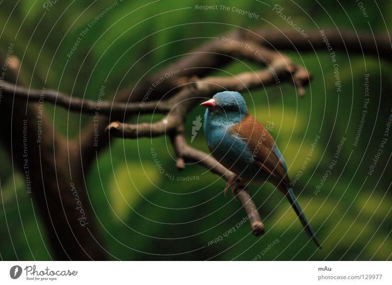 Green Blue Animal Brown Bird Flying Aviation Branch Judder Crouching Chirping
