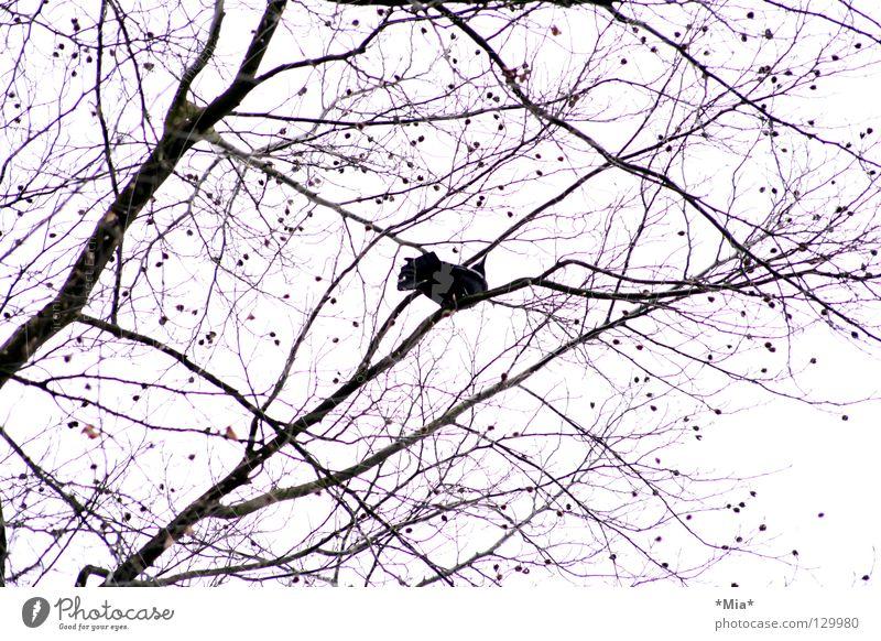 Sky White Tree Black Air Bird Pink Tall Branch Upward Twig Ornament