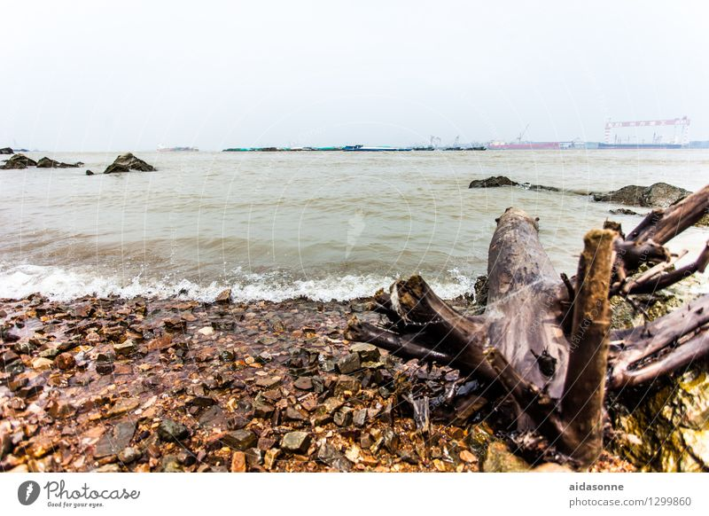 Nature Summer Water Landscape Brown Rock Lie Contentment Beautiful weather Logistics Tree trunk Longing Cloudless sky River bank China Environmental pollution