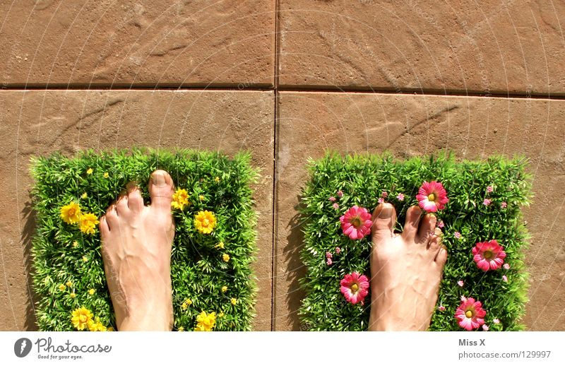 Flower Summer Vacation & Travel Meadow Grass Spring Garden Stone Feet Flat (apartment) Lawn Tile Balcony Plastic Terrace Flower meadow