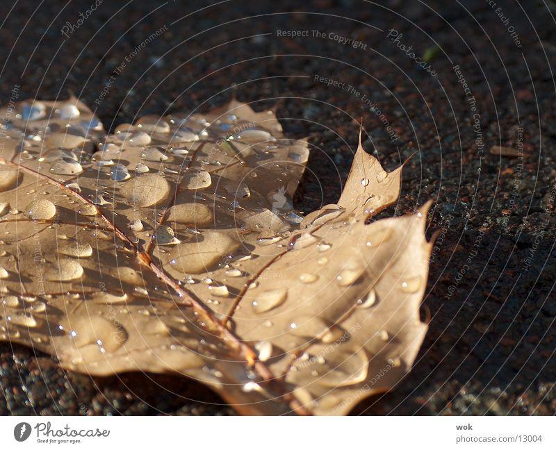 Water Leaf Drops of water Wet