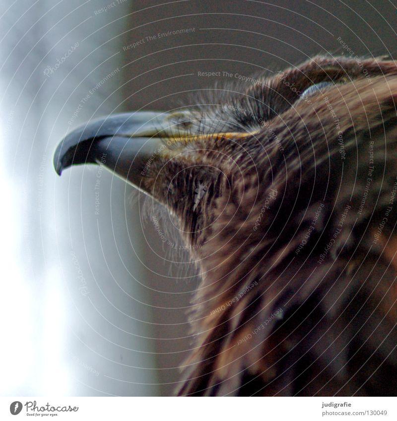 Nature Beautiful Animal Colour Life Above Bird Environment Feather Longing Beak Pride Eagle Bird of prey Ornithology