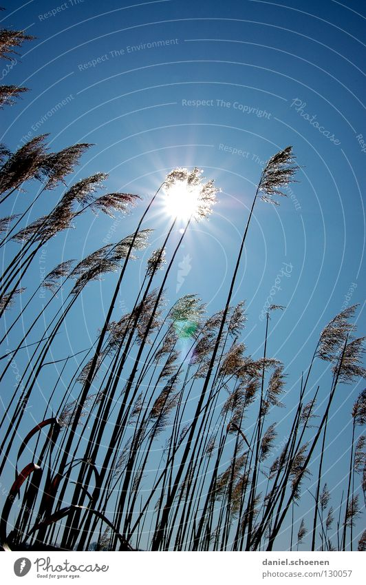 Sky Blue Sun Summer Grass Lighting Weather Beautiful weather Blade of grass Cyan Celestial bodies and the universe