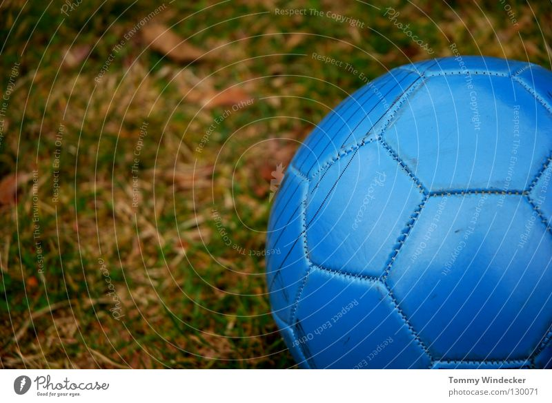 Blue Green Joy Meadow Sports Playing Germany Field Leisure and hobbies Soccer Success Round Ball Switzerland Grass surface Sphere