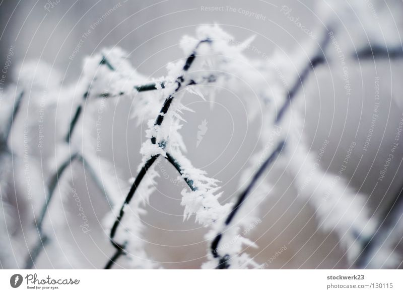 White Winter Cold Snow Gray Line Metal Ice Wind Point Change Protection Safety Frost Fence Depth of field