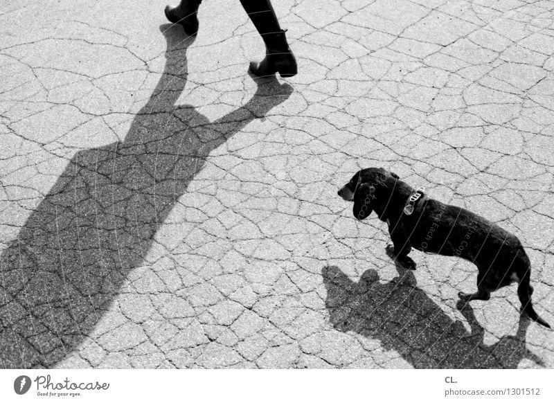 Human being Dog Animal Going Leisure and hobbies Ground Pet Dachshund