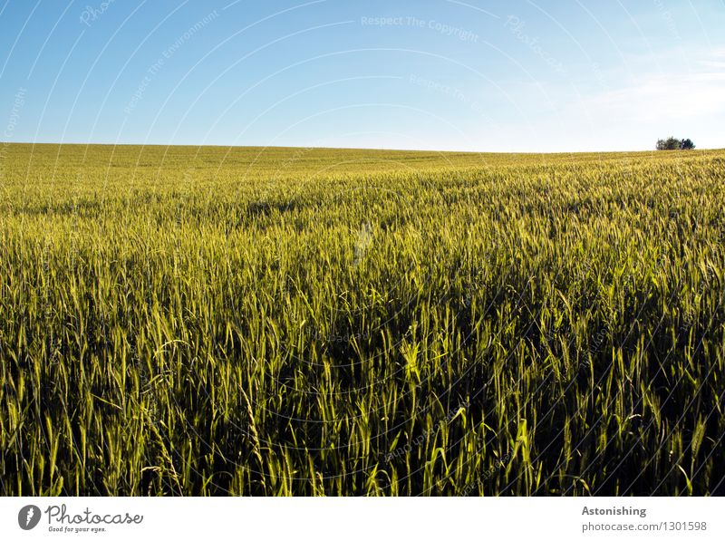 field Environment Nature Landscape Plant Air Sky Cloudless sky Horizon Summer Weather Beautiful weather Tree Agricultural crop Grain Field Austria Growth Bright