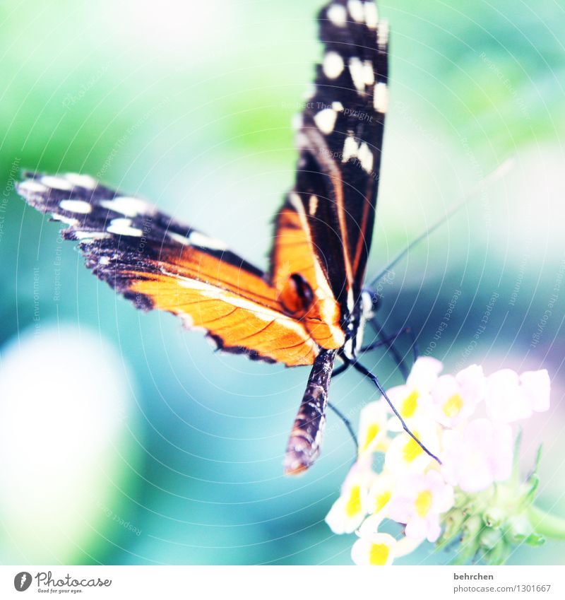 spot landing Nature Plant Animal Spring Summer Beautiful weather Flower Leaf Blossom Garden Park Meadow Wild animal Butterfly Wing Hind quarters 1 Observe