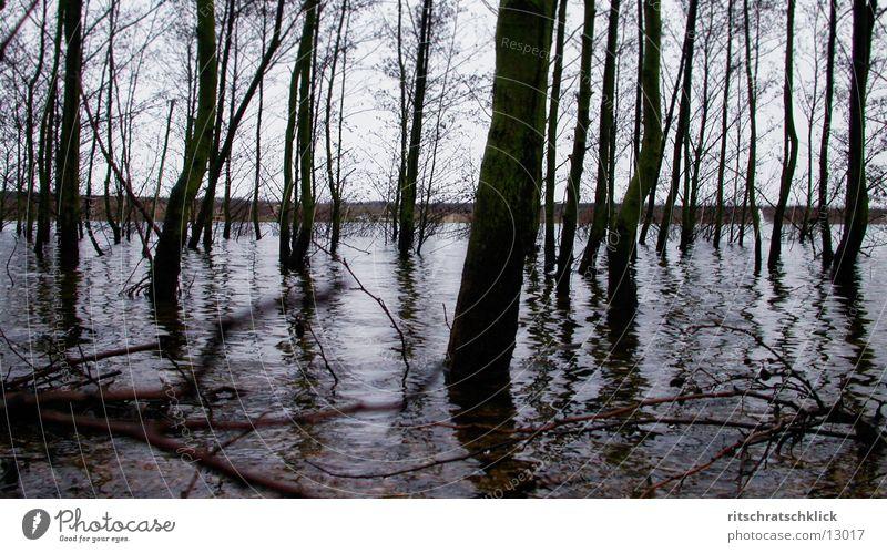 magroven;-) Lake Tree Water