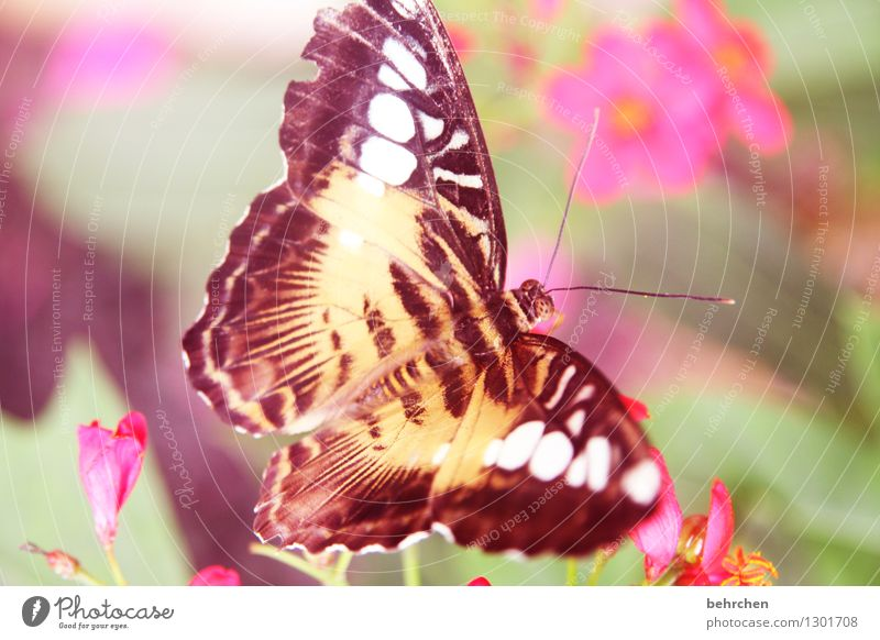 loud yes loud... Nature Plant Animal Spring Summer Beautiful weather Flower Leaf Blossom Garden Park Meadow Wild animal Butterfly Wing 1 Observe Relaxation