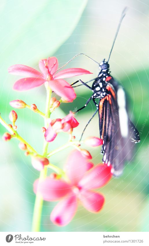 pointer Nature Plant Animal Spring Summer Flower Leaf Blossom Garden Park Meadow Wild animal Butterfly Animal face Wing 1 Relaxation Flying To feed Sit