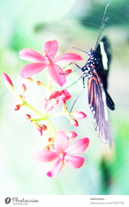 poke around Nature Plant Animal Spring Summer Beautiful weather Flower Leaf Blossom Garden Park Meadow Wild animal Butterfly Animal face Wing 1 Observe