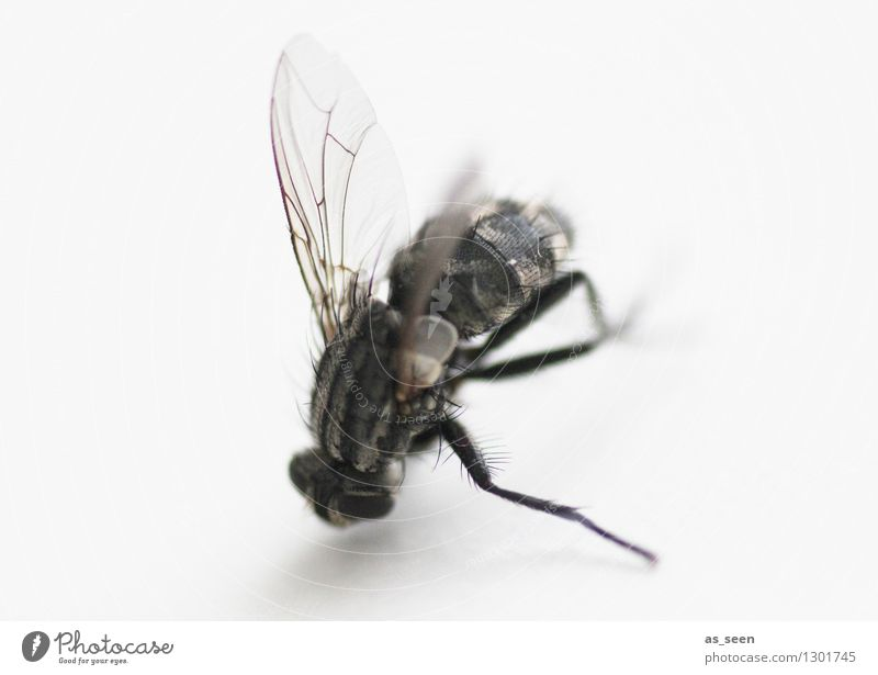 fly bone Animal Fly Legs Wing Eyes 1 Crawl Lie Authentic Threat Dark Disgust Creepy Gray Black Death Fear Senior citizen Bizarre Disaster Nature