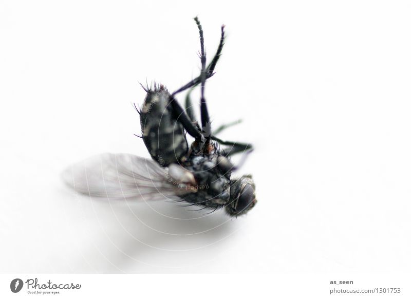 post mortem Hallowe'en Environment Animal Fly Insect Wing housefly Eyes 1 Lie Authentic Disgust Creepy Gray Black Fear Horror Fear of death Senior citizen