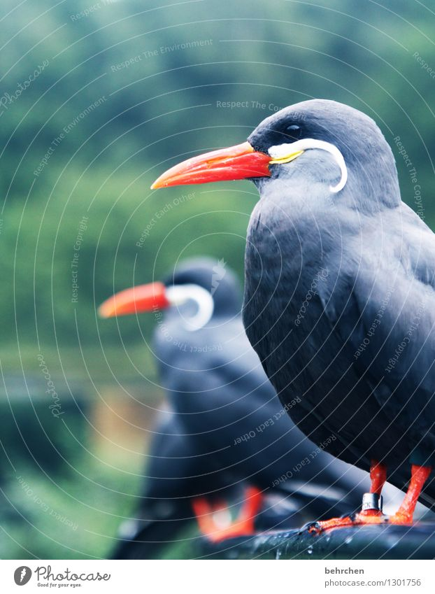 Nature Beautiful Relaxation Animal Eyes Gray Exceptional Flying Bird Orange Wild animal Sit Feather Wing Observe Cool (slang)