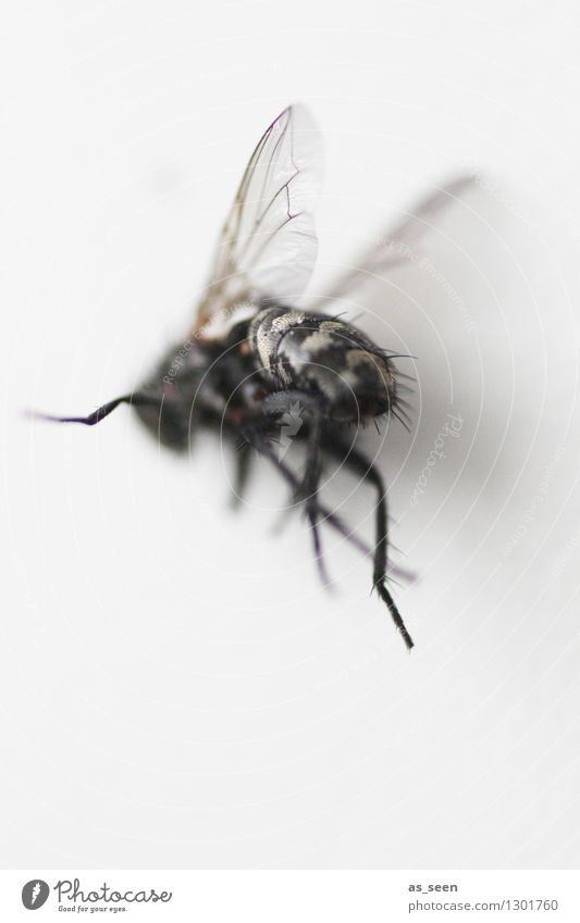 Fly on the run Hallowe'en Animal Insect Wing Legs 1 Flying Authentic Exceptional Disgust Creepy Hideous Gray Black Death Fear Bizarre Nature Dark Hair Floating