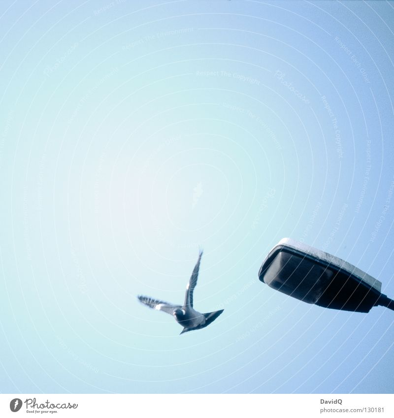 Sky Lamp Freedom Air Bird Flying Beginning Aviation Peace Feather Wing Lantern Symbols and metaphors Pigeon Minimal