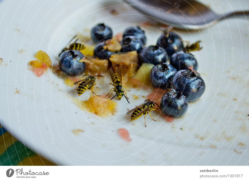 wasps Wasps common wasp Hymenoptera Insect Pierce Plagues Cake Fruit Lettuce Salad Fruit salad Sweet Lure bothersome Disturbance Disturbed Annoy Threat