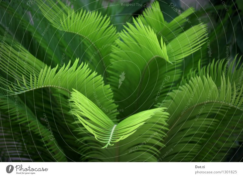 jungle Nature Plant Exotic Green Palm tree Virgin forest Undergrowth Colour photo Exterior shot Deserted Shallow depth of field