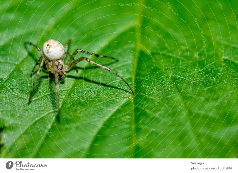 Small but fine Nature Landscape Plant Animal Summer Flower Grass Bushes Leaf Garden Park Meadow Field Forest Spider Animal face 1 Hang Crawl Crab spider