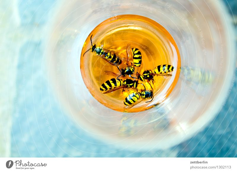 Wasps in Aperol common wasp Hymenoptera Insect Pierce Plagues Sweet Lure bothersome Disturbance Annoy Threat Dangerous Food photograph Summer midsummer Warmth