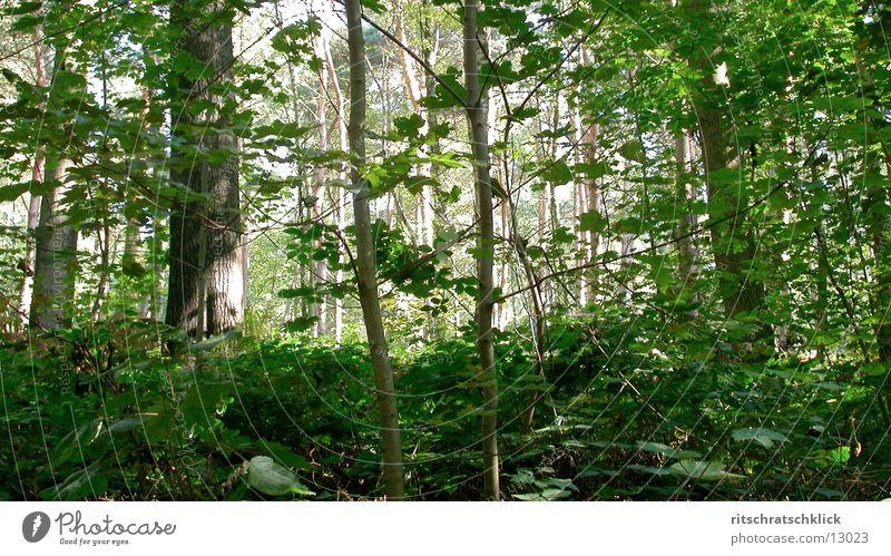 undergrowth Forest Leaf Undergrowth