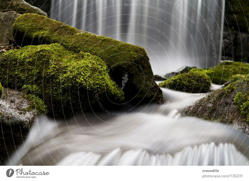 curtain of water Brook Water Overgrown Forest Fog Wet Gravity Green Dark Long exposure Flow River To fall Waterfall Rock Stone Nature Abstract Exterior shot