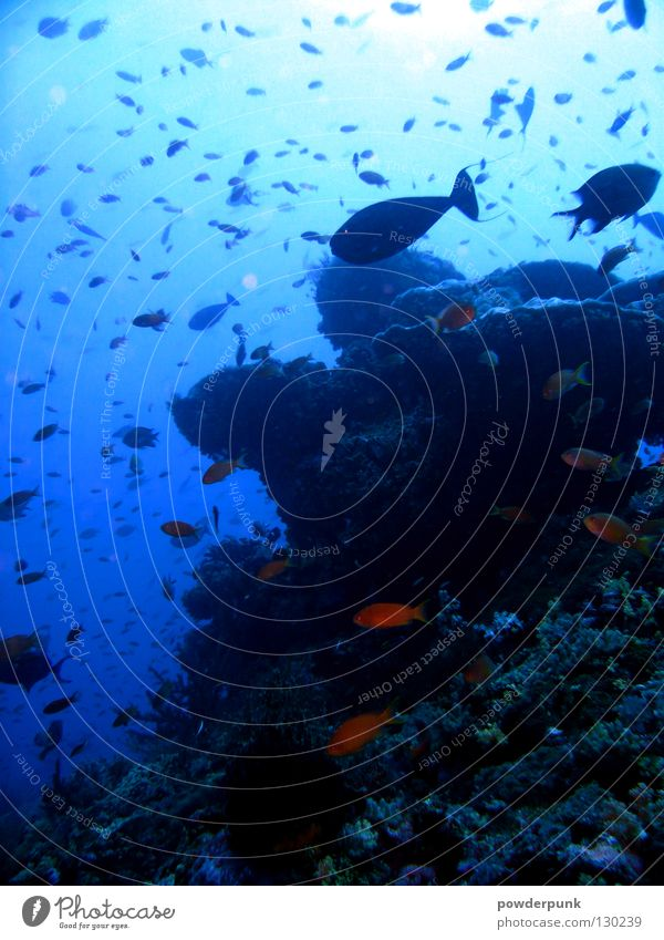 Water Ocean Fish Underwater photo Dive Reef