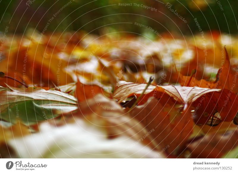 leaf hood Colour photo Subdued colour Multicoloured Exterior shot Close-up Detail Pattern Structures and shapes Deserted Copy Space left Copy Space right