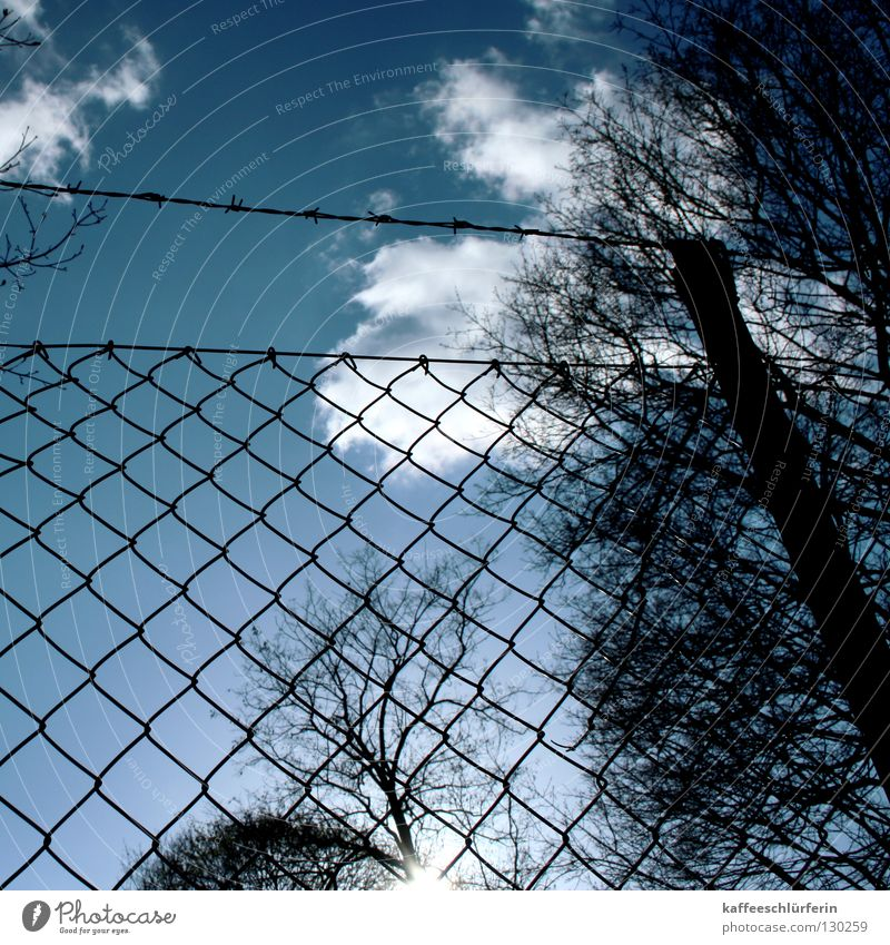 transparency Clouds Fence Barbed wire Sunbeam White Tree Vista Sky Blue