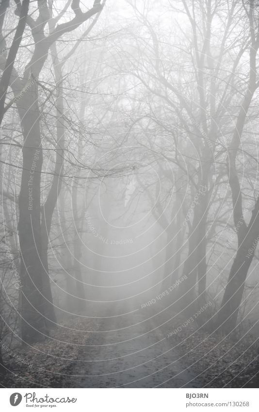 Nature Tree Winter Loneliness Forest Dark Cold Sadness Fog Wet Grief Frost Mysterious Frozen Distress