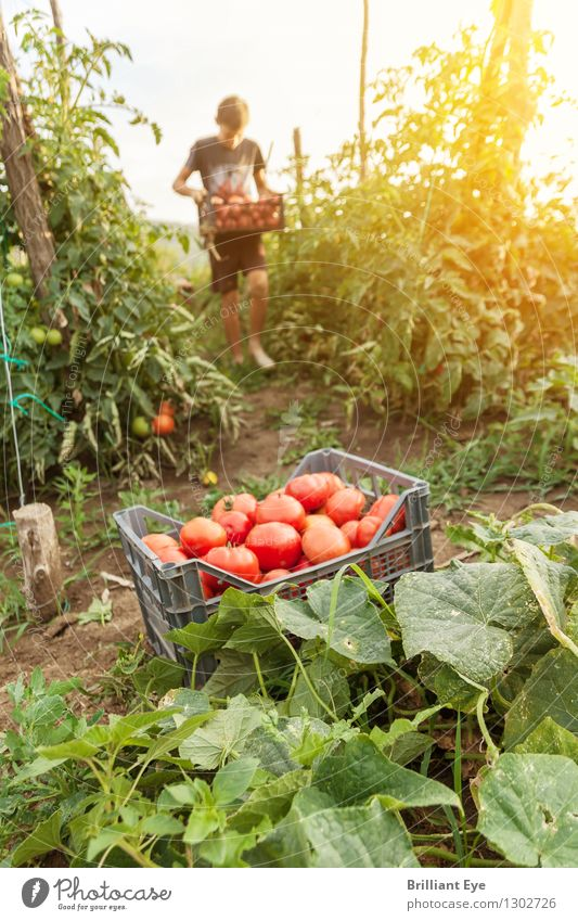 Human being Nature Summer Warmth Healthy Moody Going Work and employment Contentment Field Fresh Authentic Agriculture Vegetable Harvest Sustainability