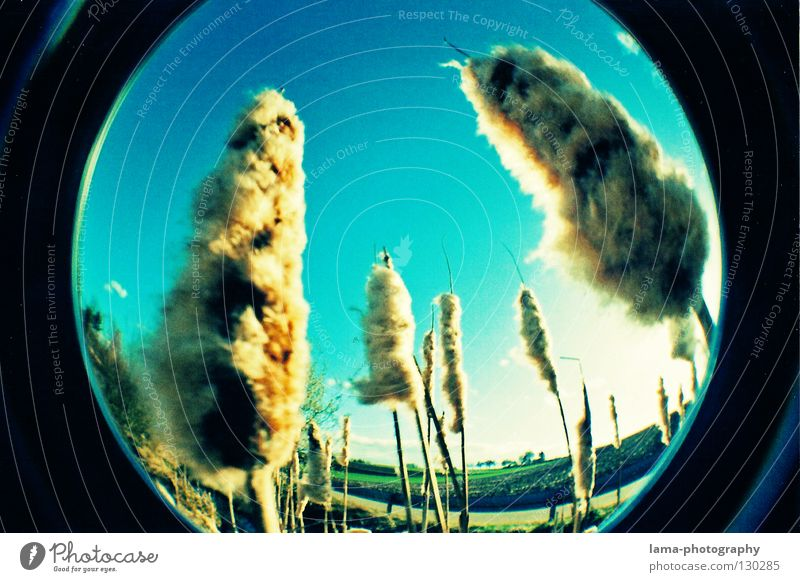 THE FUTURE Sun Sunbeam Summer Common Reed Grass Blade of grass Absorbent cotton Soft Wind Breeze Morning Fisheye Round Snapshot Wide angle Washer Analog Nature