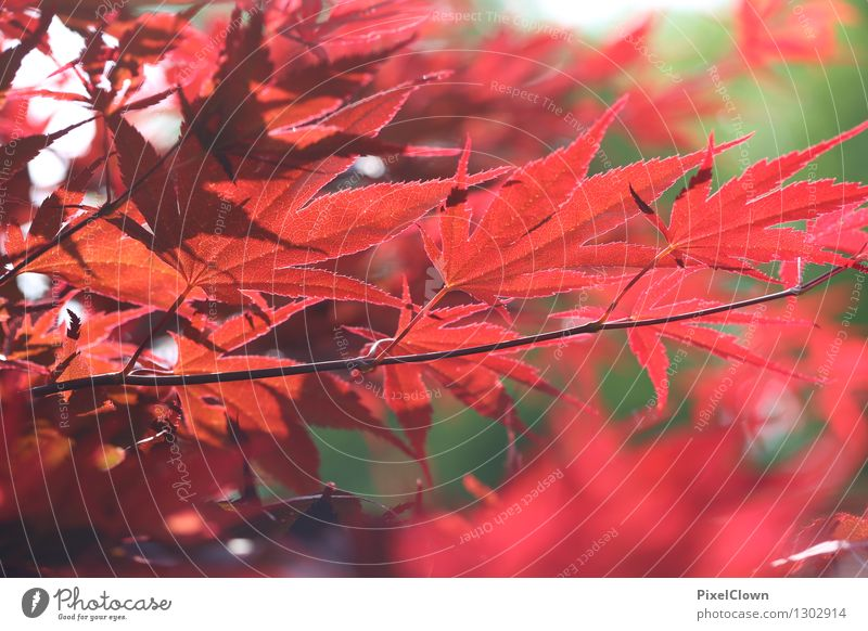 Nature Plant Beautiful Tree Red Leaf Animal Forest Garden Lifestyle Moody Park Dream Contentment Elegant Idyll