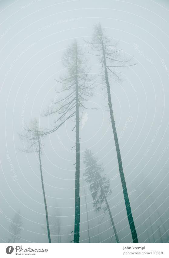 Tree Forest Dark Death Gray Fog Transience Creepy Fir tree Ghosts & Spectres  Spruce