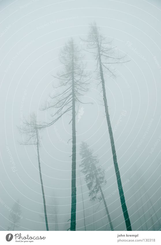 Tree Forest Dark Death Gray Fog Transience Creepy Fir tree Ghosts & Spectres  Spruce